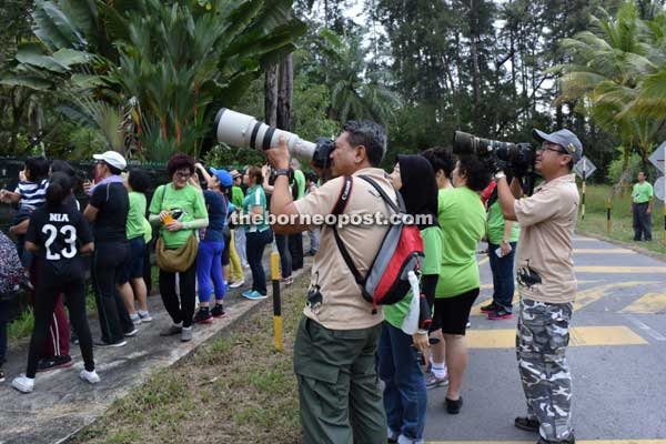 Jimmy-Juliet still big draw for nature lovers at Hornbill Walk