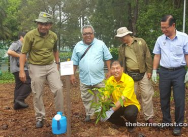 STB plants trees at Piasau Nature Reserve